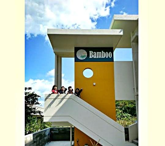 bamboo-6-2